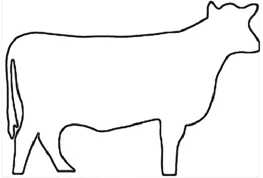 beef cow coloring pages outline of a cow free download on clipartmag coloring beef pages cow