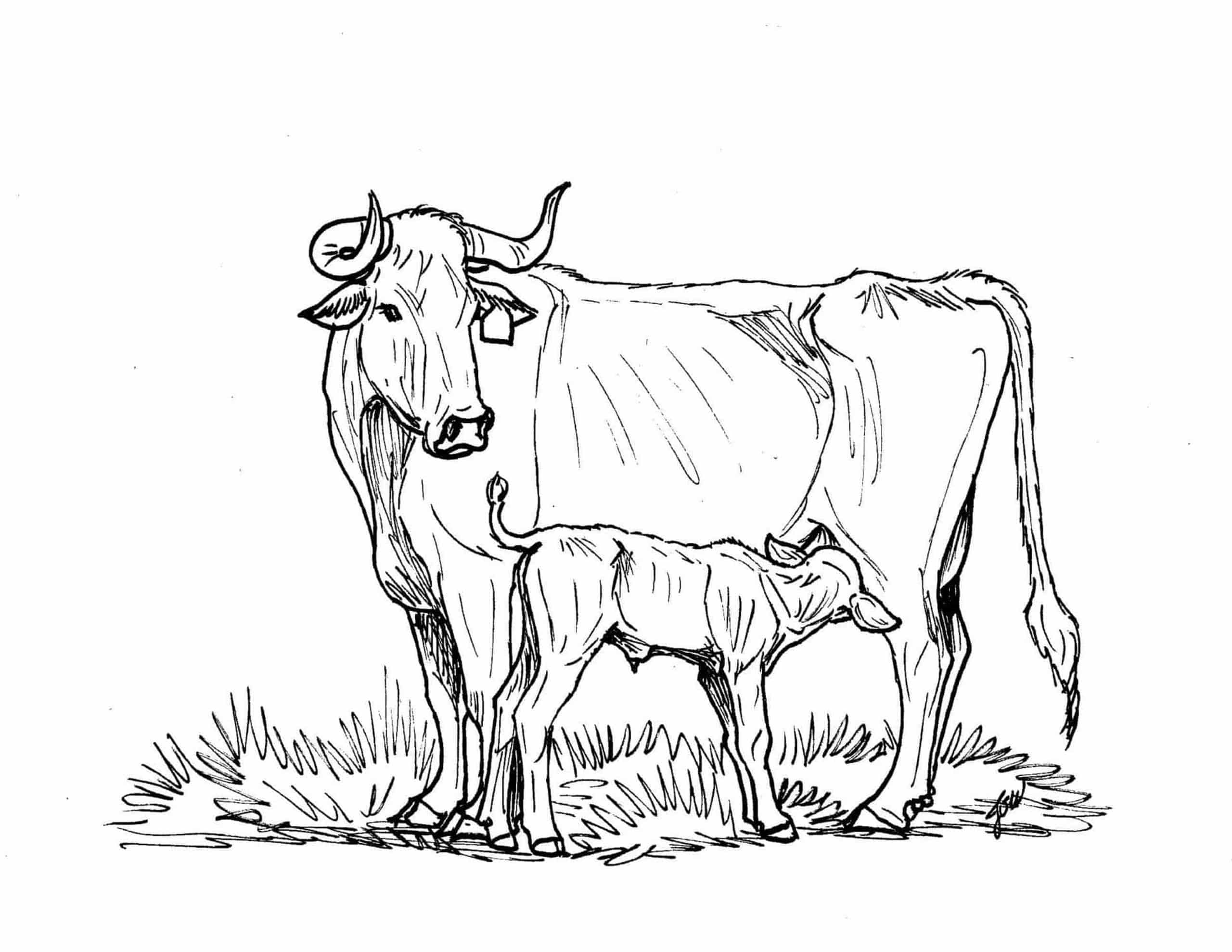 beef cow coloring pages ranching coloring pages tslncom beef pages coloring cow