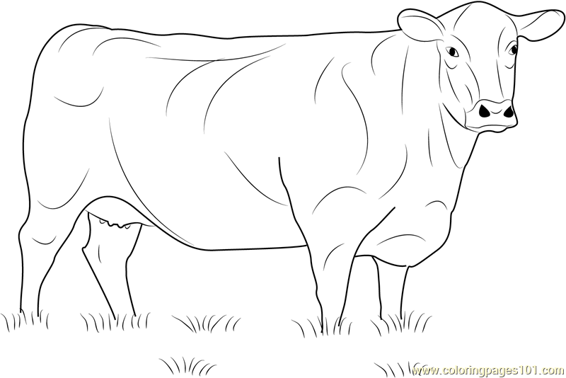 beef cow coloring pages show cattle coloring pages coloring pages pages beef cow coloring