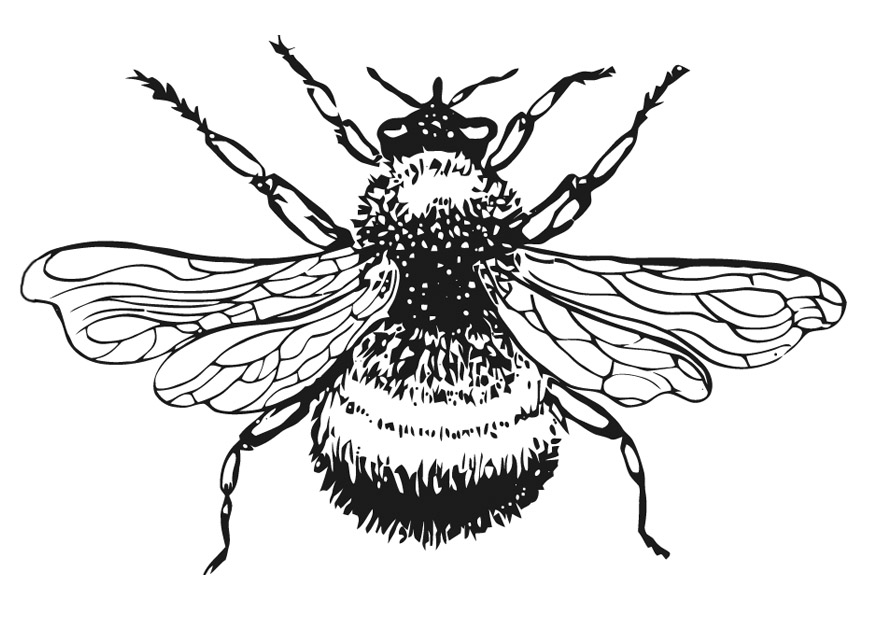 bees colouring pages bumble bee clip art free clipartsco pages bees colouring