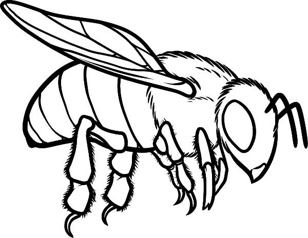 bees colouring pages european honey bee coloring pages coloring sky pages colouring bees