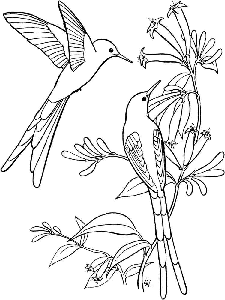 bird coloring images bird coloring pages coloring bird images