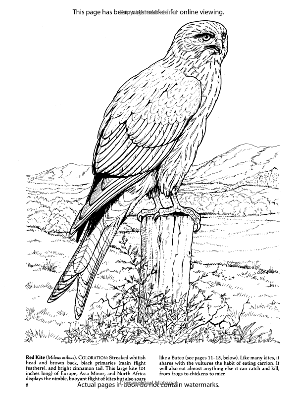 bird coloring images falcons coloring pages download and print falcons coloring images bird