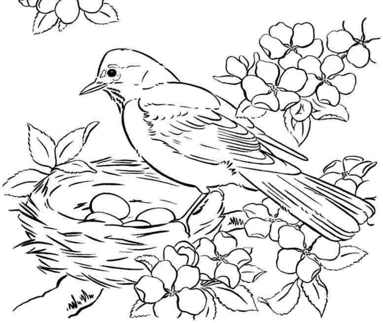 bird coloring images sparrow coloring pages download and print sparrow coloring bird images