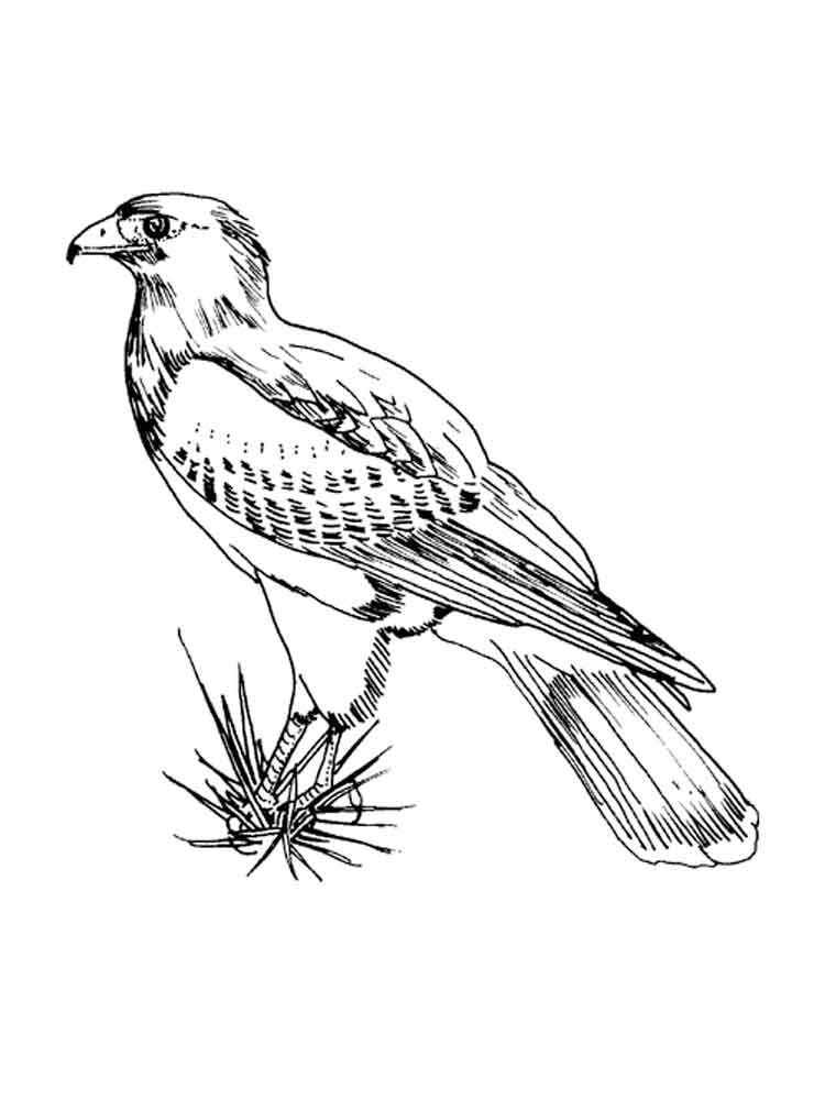 bird coloring images the special characteristic of the coloring pages for adults bird coloring images