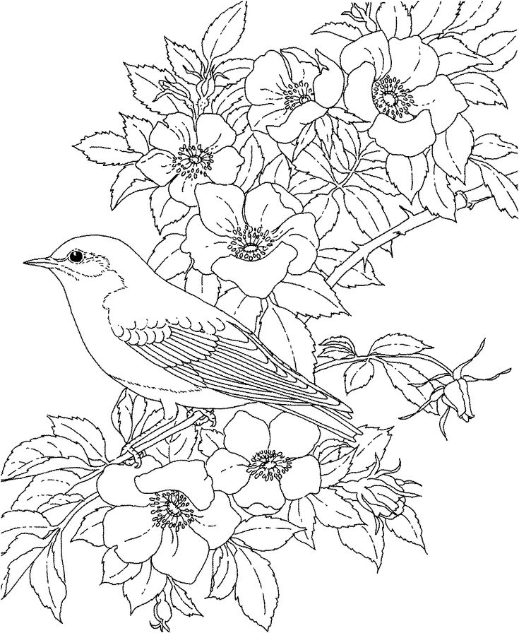 bird coloring pages for adults adult coloring pages printable free free printable for coloring adults pages bird