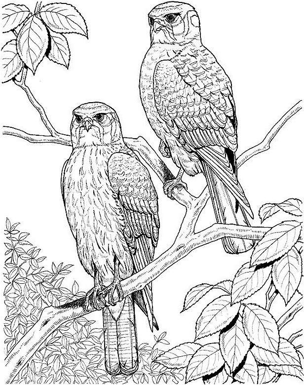 bird coloring pages for adults bird coloring page bird pages adults for coloring