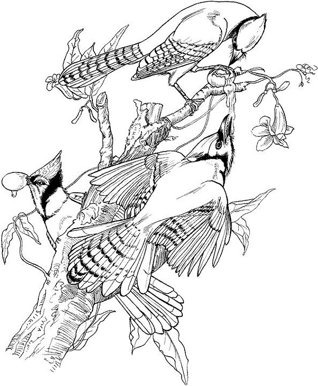 bird coloring pages for adults bird coloring page coloring bird adults pages for