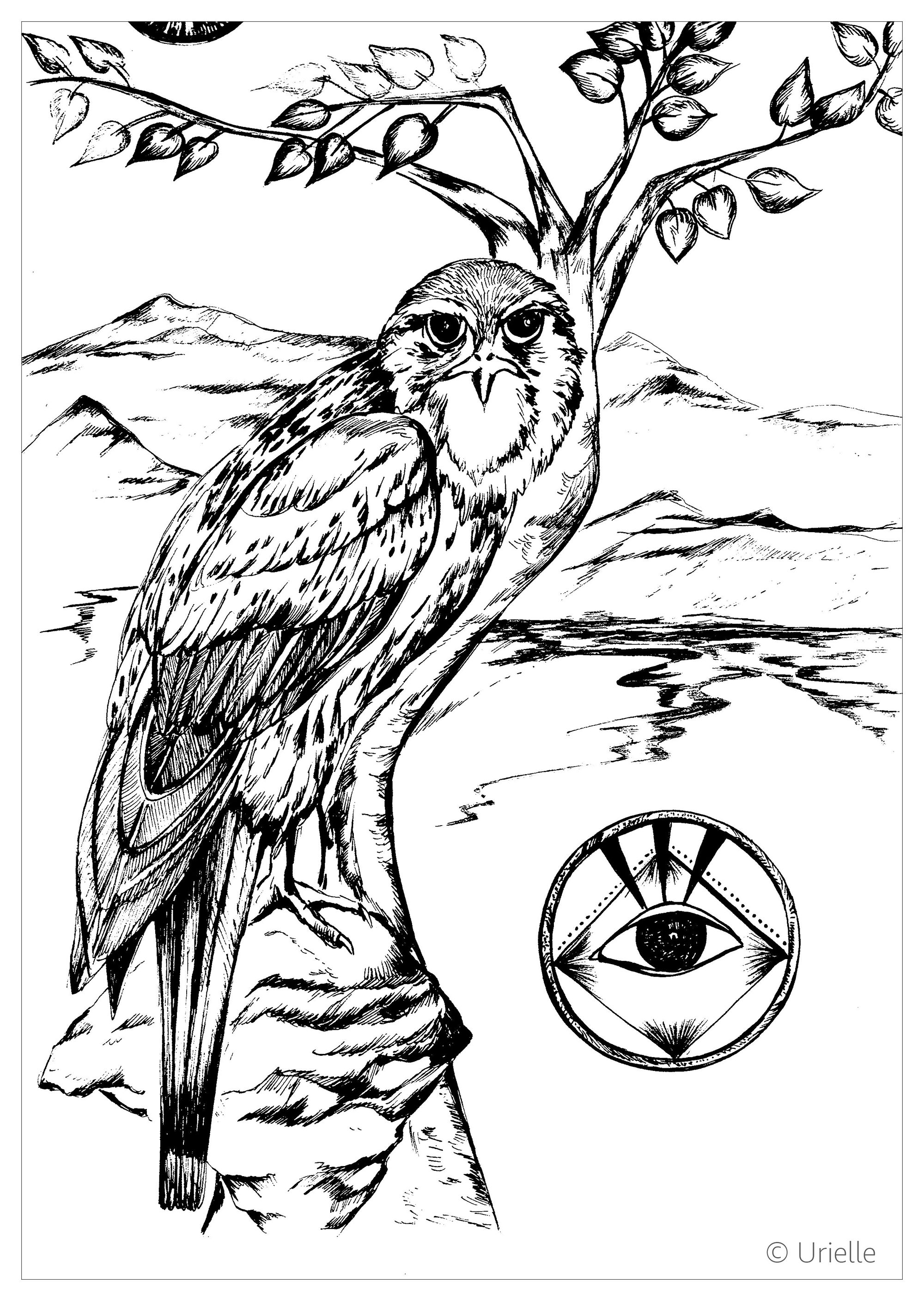 bird coloring pages for adults falcon birds adult coloring pages coloring for adults pages bird