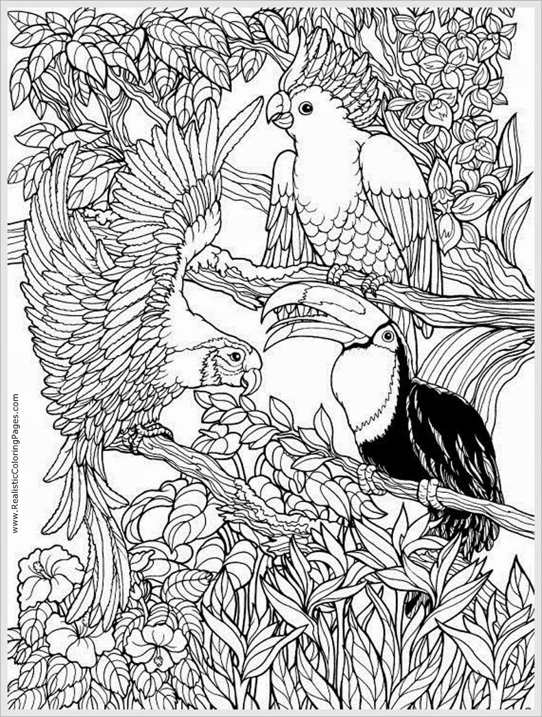 bird coloring pages for adults free printable adult coloring pages birds get coloring pages adults coloring pages bird for