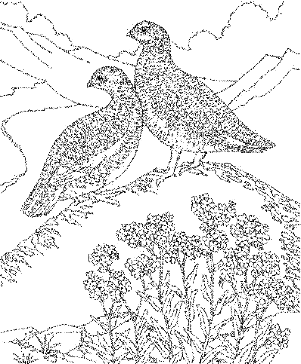 bird coloring pages for adults hard bird coloring pages for adults bestappsforkidscom adults for bird coloring pages