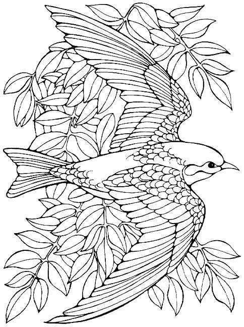 bird coloring pages for adults printable advanced bird coloring pages for adults free bird for adults pages coloring