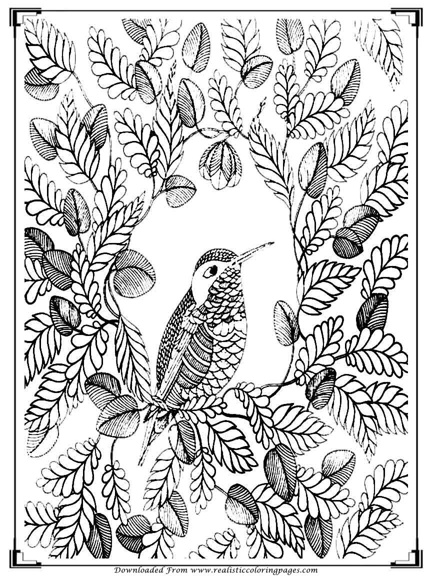 bird coloring pages for adults printable birds coloring pages for adults realistic adults coloring for bird pages