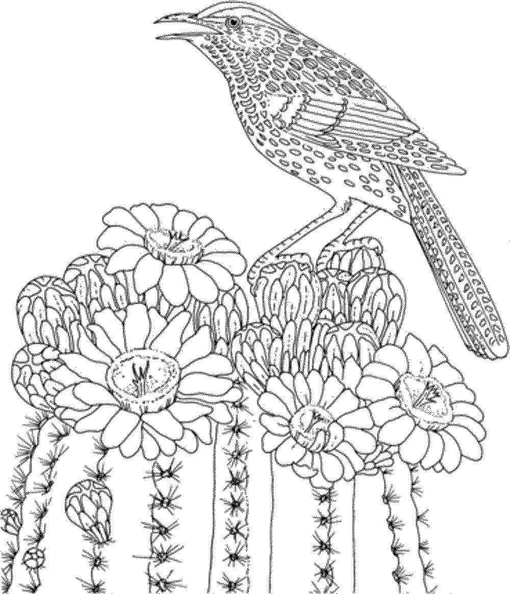 bird coloring pages for adults printable birds coloring pages for adults realistic adults pages bird for coloring