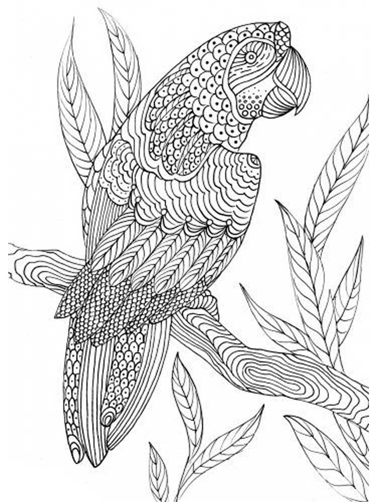 bird coloring pages for adults zentangle birds coloring pages for adults adults bird coloring for pages