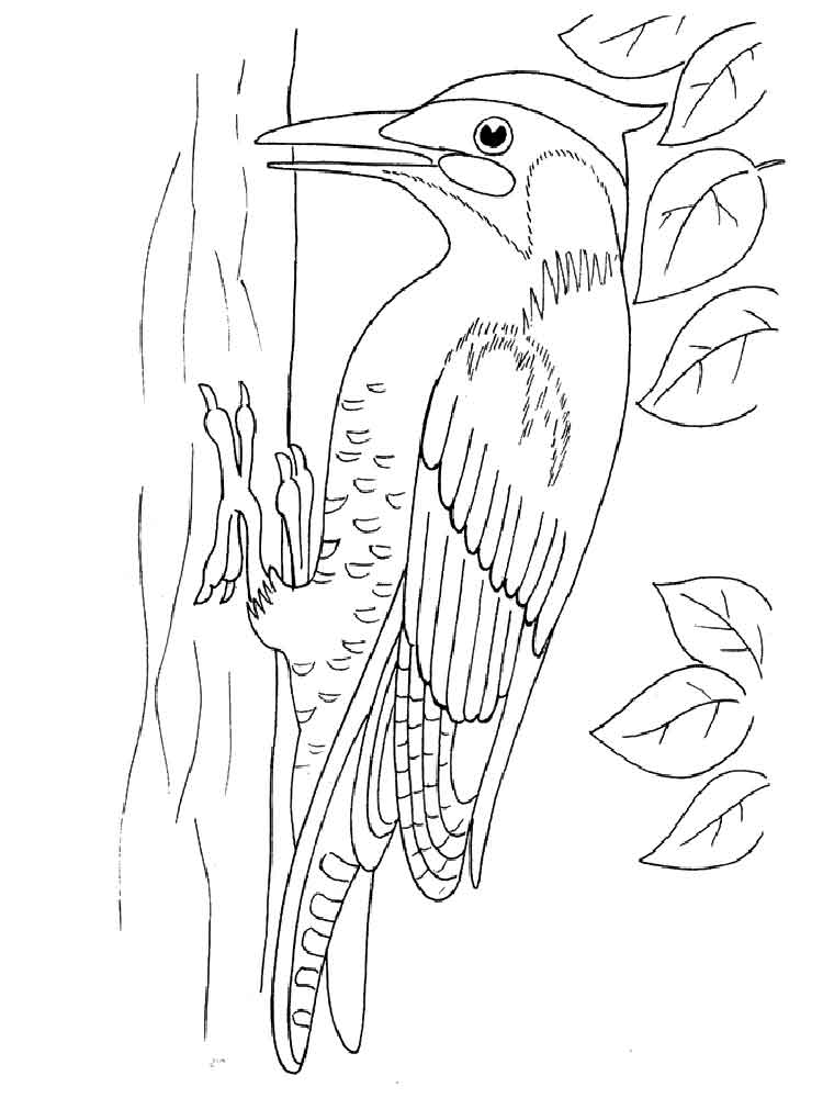 bird printout free printable woodpecker coloring pages for kids 1000 bird printout