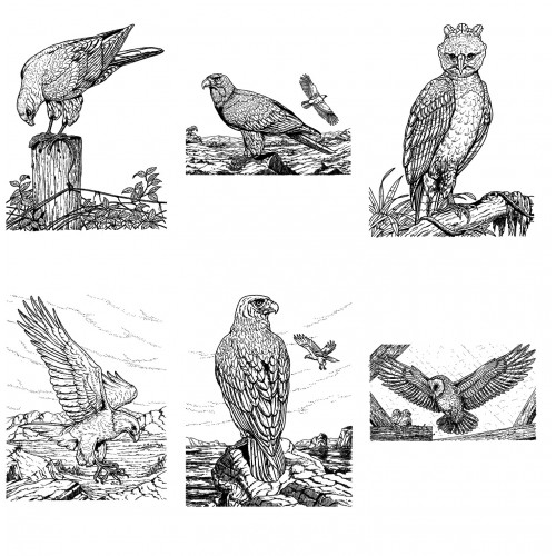 birds of prey coloring pages 131 best coloring birds of prey images on pinterest birds coloring prey of pages