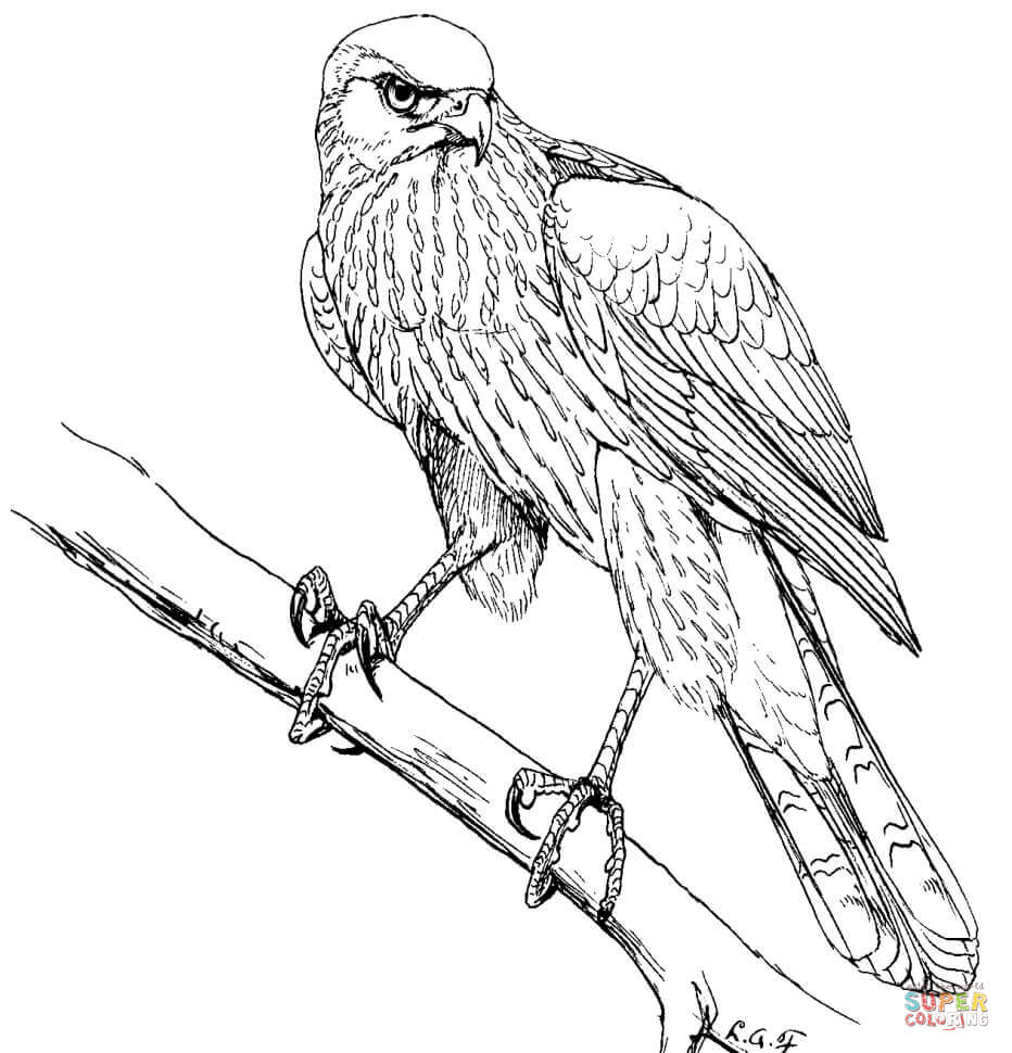 birds of prey coloring pages 131 best coloring birds of prey images on pinterest of birds prey pages coloring