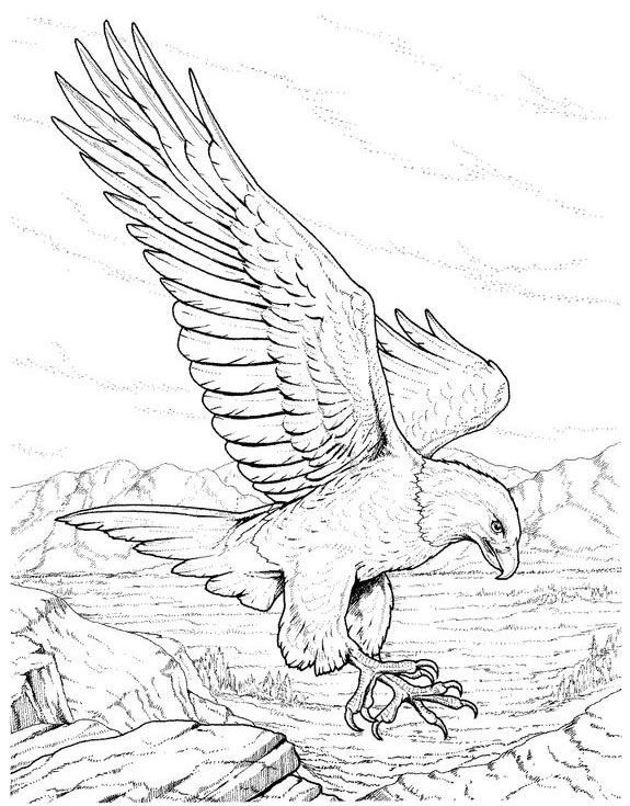 birds of prey coloring pages adult coloring book birds of prey coloring birds prey of pages
