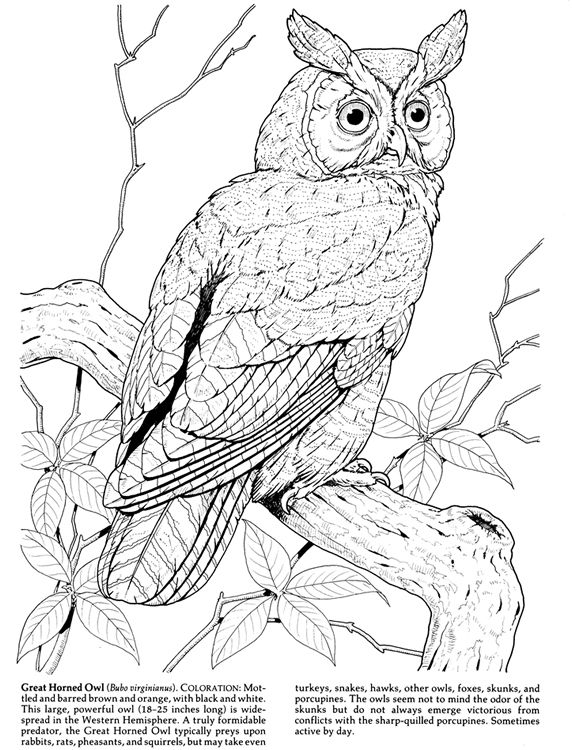 birds of prey coloring pages ausmalbild der falke ein greifvogel ausmalbilder of pages birds prey coloring
