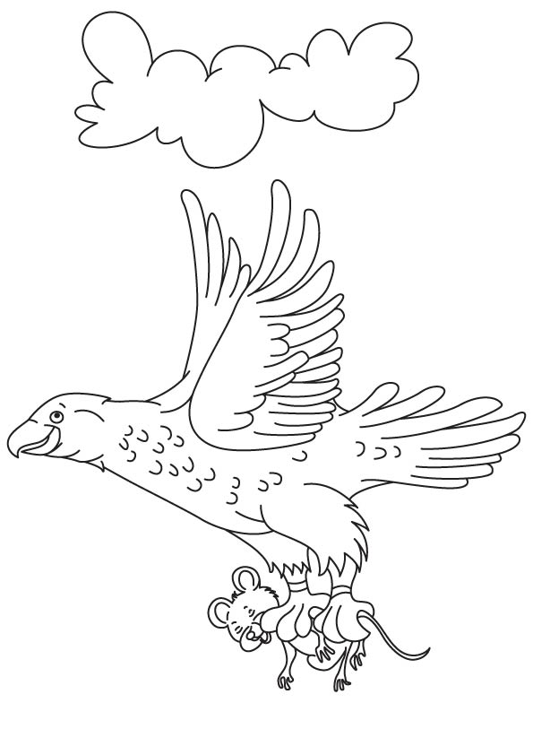 birds of prey coloring pages birds of prey coloring pages birds pages of coloring prey