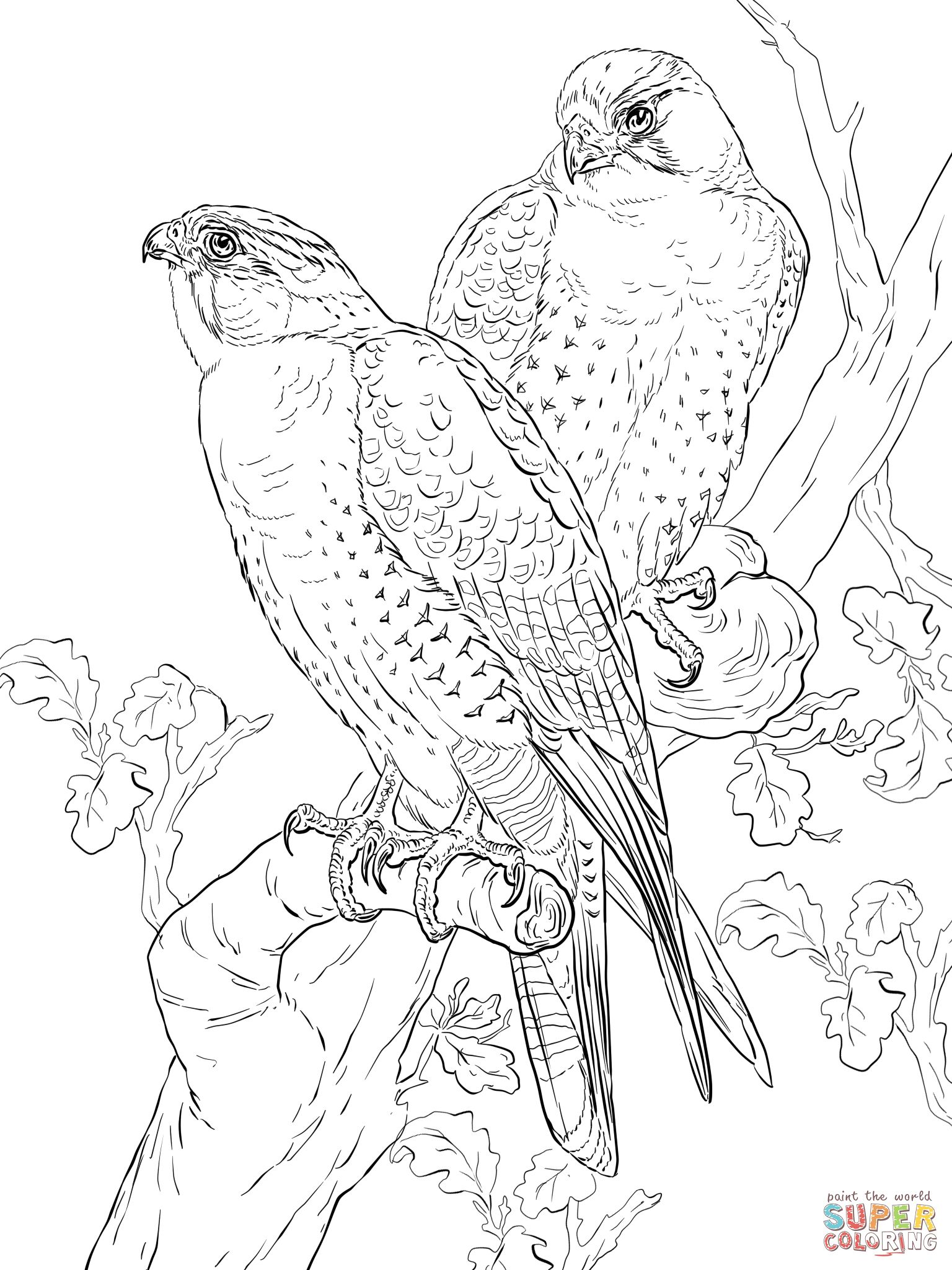 birds of prey coloring pages birds of prey coloring pages hakume colors birds of coloring prey pages