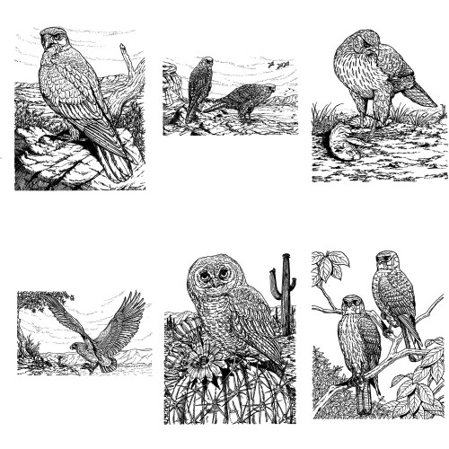 birds of prey coloring pages download sparrowhawk coloring for free designlooter 2020 coloring pages prey of birds