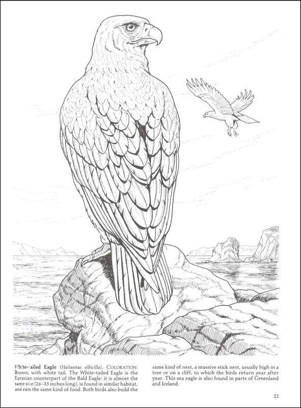 birds of prey coloring pages free eagle coloring pages birds of coloring pages prey