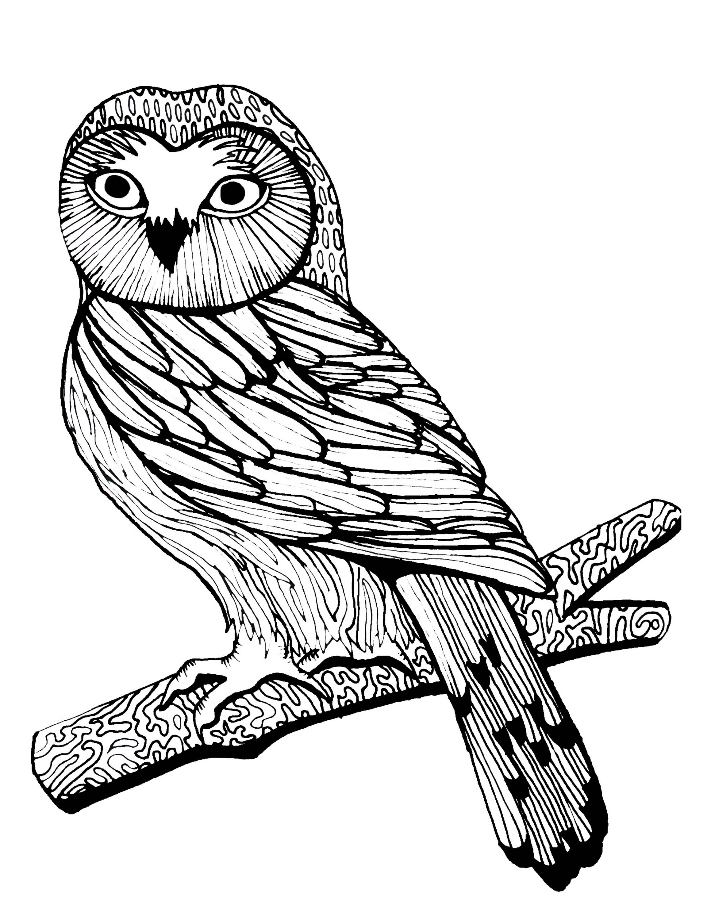 birds of prey coloring pages hawks coloring pages free coloring pages birds of prey birds coloring pages prey of