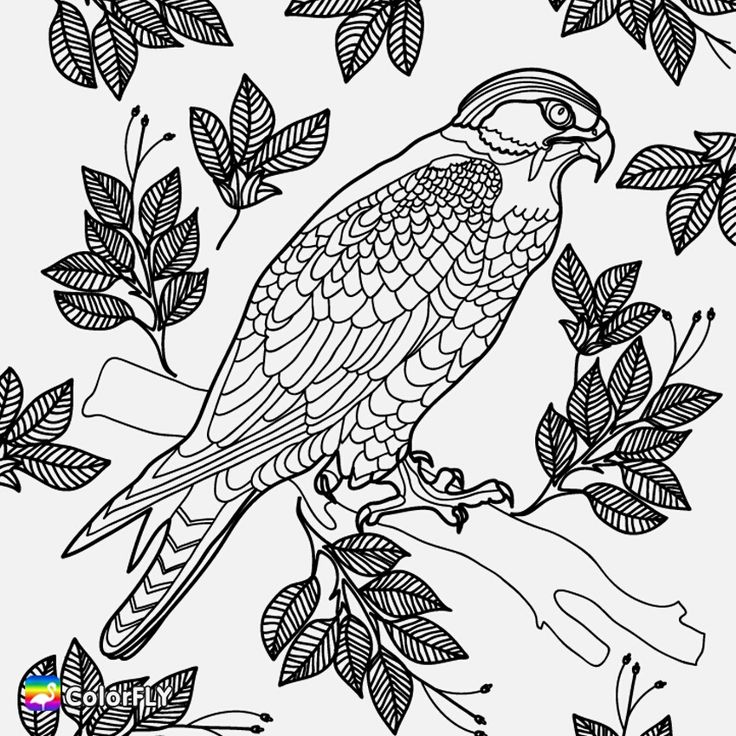 birds of prey coloring pages peregrine falcons super coloring bird coloring pages pages birds coloring prey of