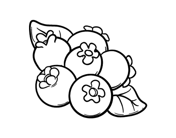 blueberry coloring page blueberries coloring pages coloring pages to download blueberry page coloring