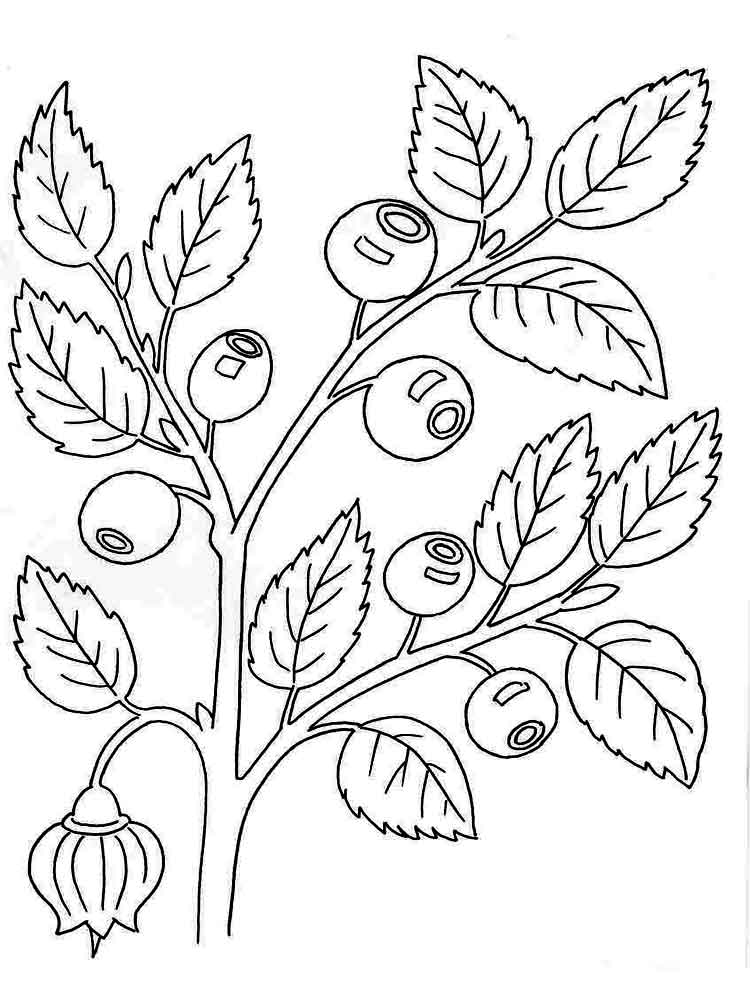 blueberry coloring page blueberries coloring pages to download and print for free coloring blueberry page