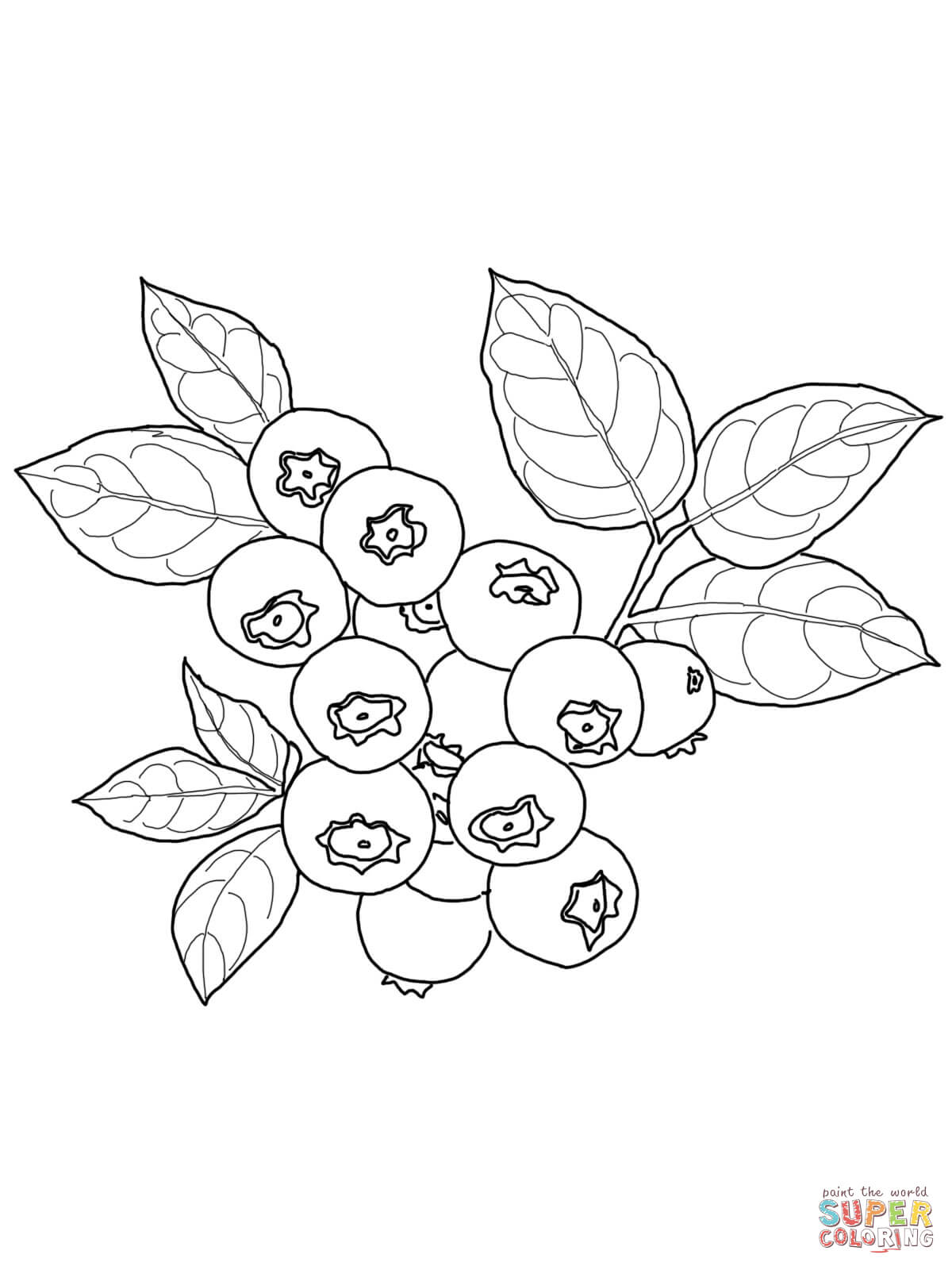 blueberry coloring page blueberries coloring pages to download and print for free coloring page blueberry