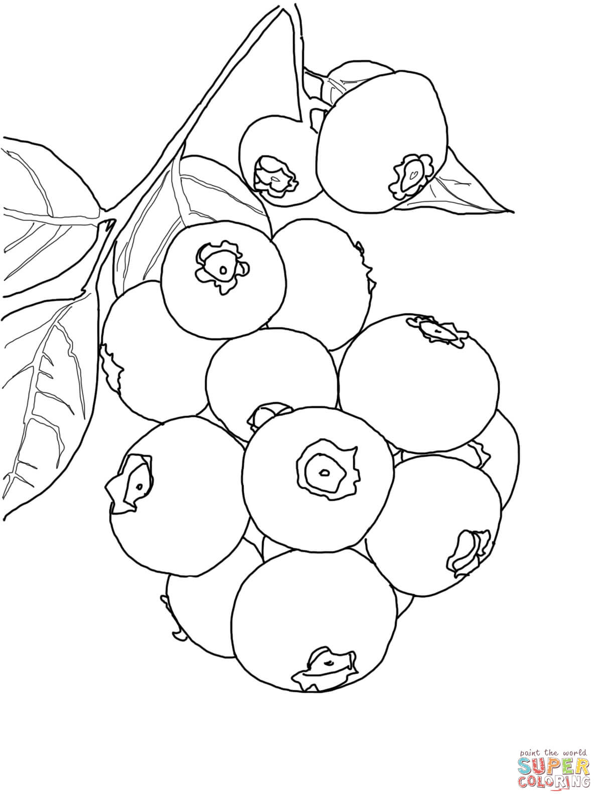 blueberry coloring page blueberry branch coloring page free printable coloring pages page coloring blueberry