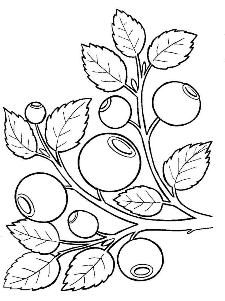 blueberry coloring page blueberry bush outline coloring pages best place to color coloring page blueberry