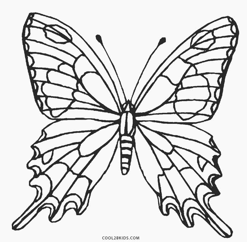 butterfly coloring pages free a butterfly with spotting mark wings coloring page butterfly coloring pages free