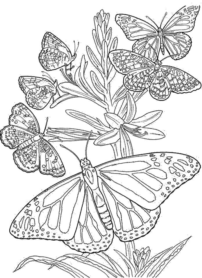 butterfly coloring pages free butterfly coloring pages for adults best coloring pages pages free butterfly coloring