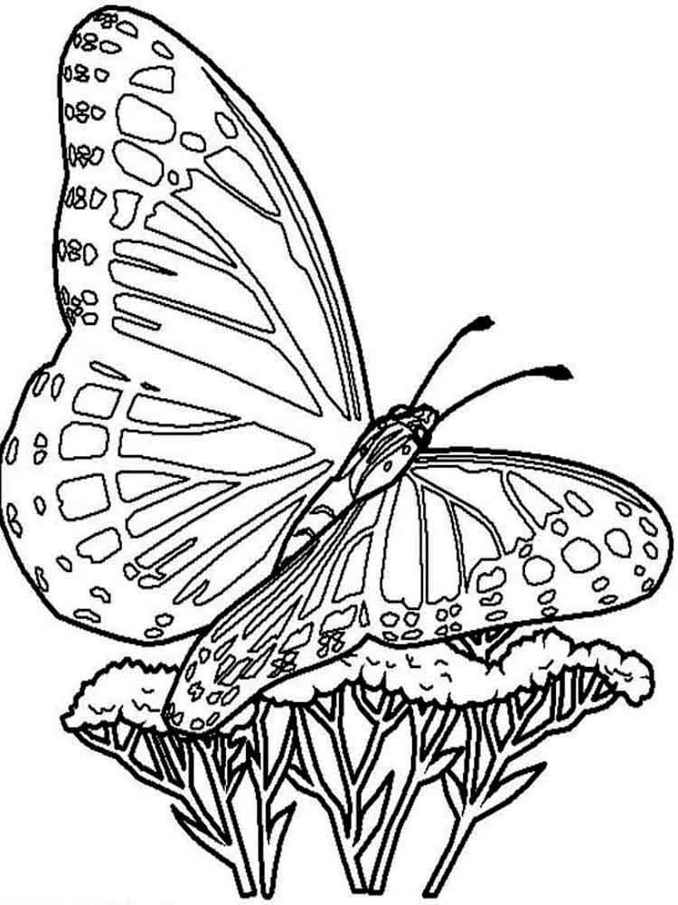 butterfly coloring pages free butterfly coloring pages for kids pages butterfly coloring free