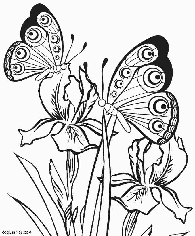 butterfly coloring pages free butterfly coloring pages team colors free pages coloring butterfly