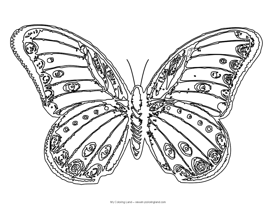 butterfly coloring pages free free printable butterfly coloring page ausdruckbare free pages coloring butterfly