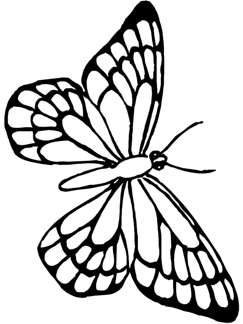 butterfly drawing for coloring black and white monarch butterfly free clip art butterfly for coloring drawing