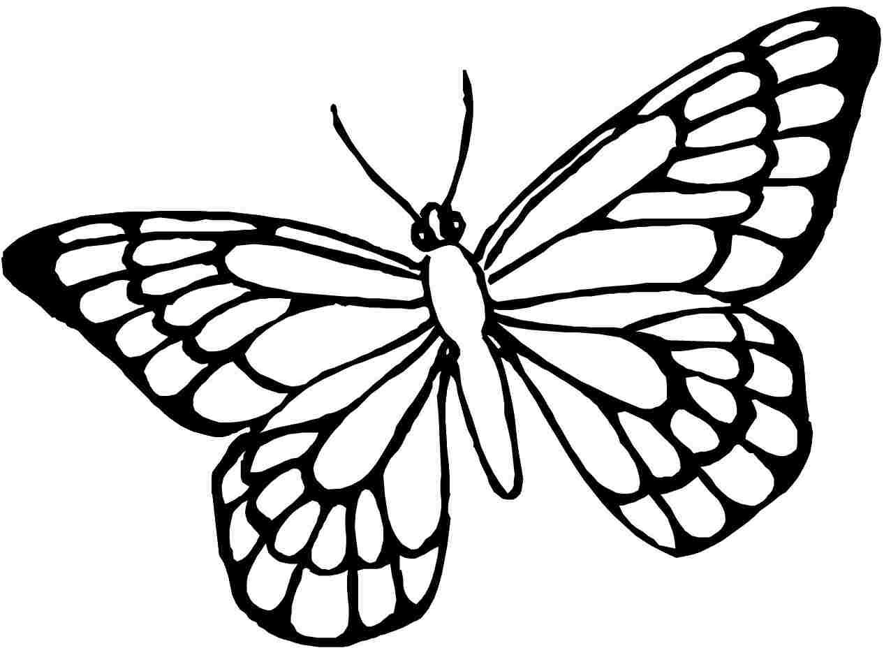 butterfly drawing for coloring butterfly coloring pages coloring for drawing butterfly