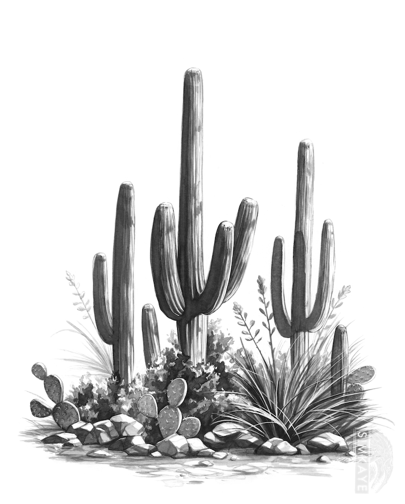 cactus drawing 6 cactus drawing vector eps svg png transparent cactus drawing 1 1