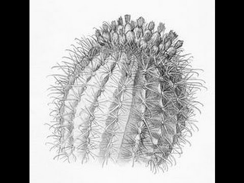 cactus drawing cactus cartoon drawing at getdrawings free download drawing cactus