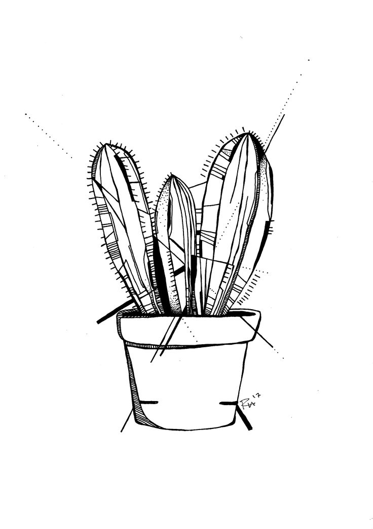 cactus drawing download high quality cactus clip art black transparent cactus drawing