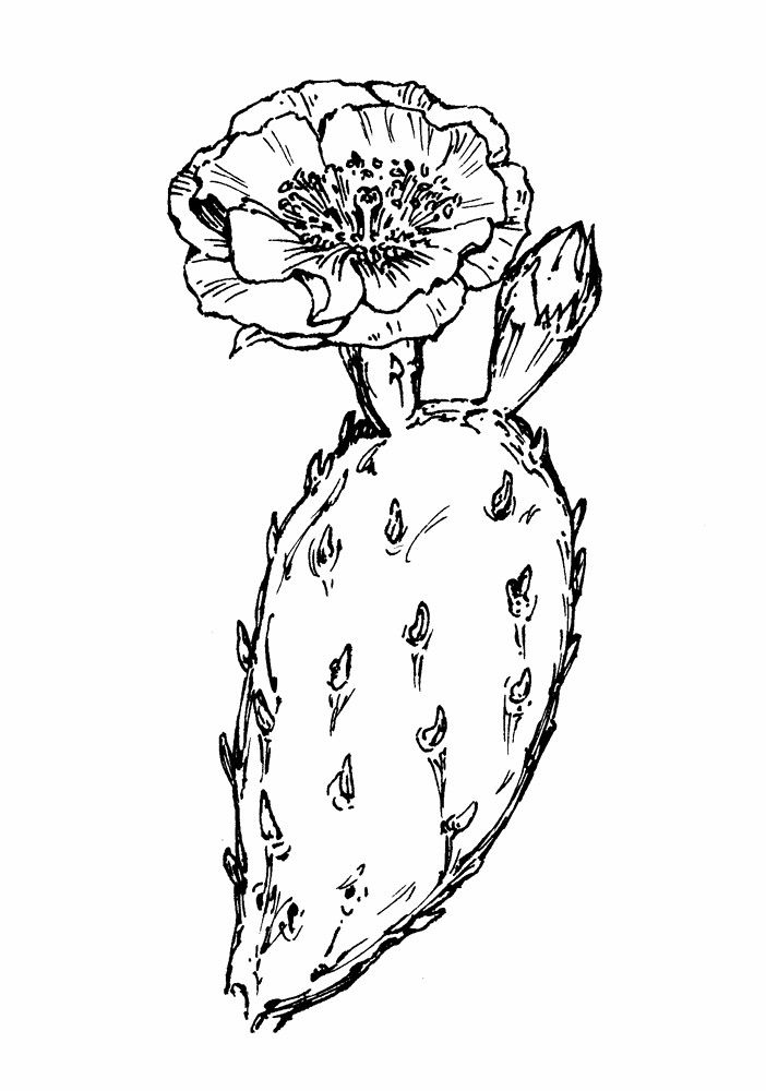 cactus drawing draw cute little succulents or use as wallpaper drawing cactus