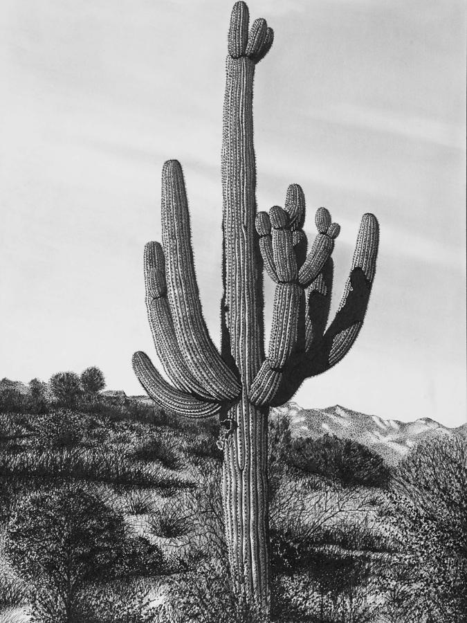 cactus drawing saguaro cactus illustrations royalty free vector graphics cactus drawing