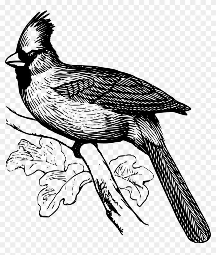 cardinal coloring pages desert cardinals coloring page free coloring pages online cardinal coloring pages