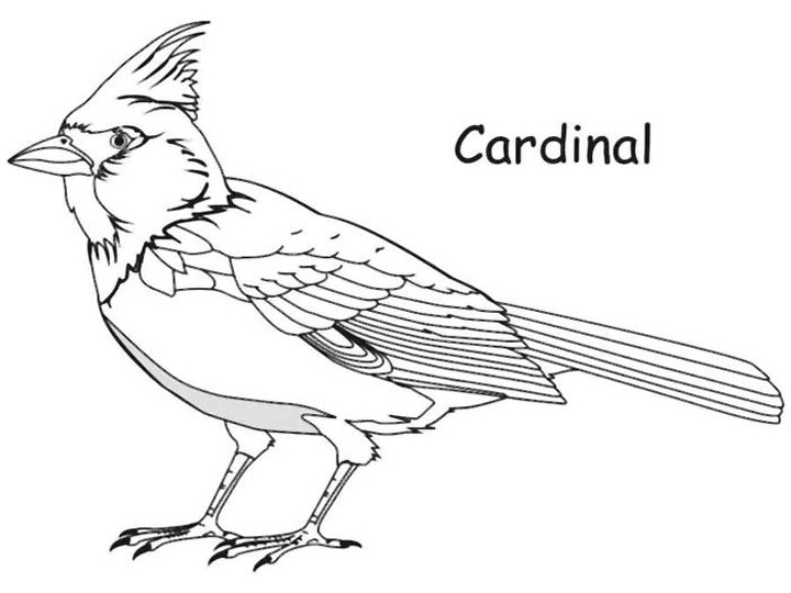 cardinal coloring pages norther free coloring pages cardinal coloring pages