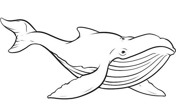 cartoon whale coloring page 20 printable whale coloring pages your toddler will love cartoon page whale coloring